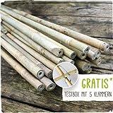 25 x Lange Bambusstäbe - Bambusstangen 182 cm lang/ 12-14 mm dick